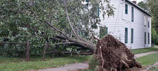 Large tree falling in a yard almost hitting a house.